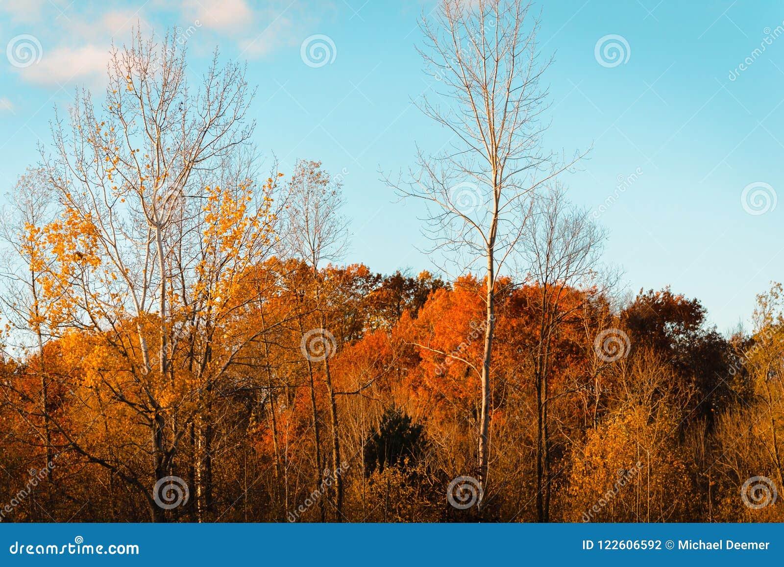 Landschap van Wahlfield-Park dichtbij Grand Rapids Michigan