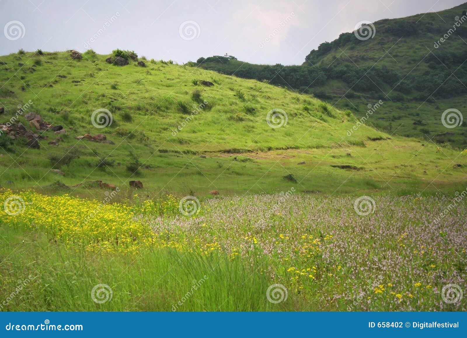Landschappen en bloemrijke weiden