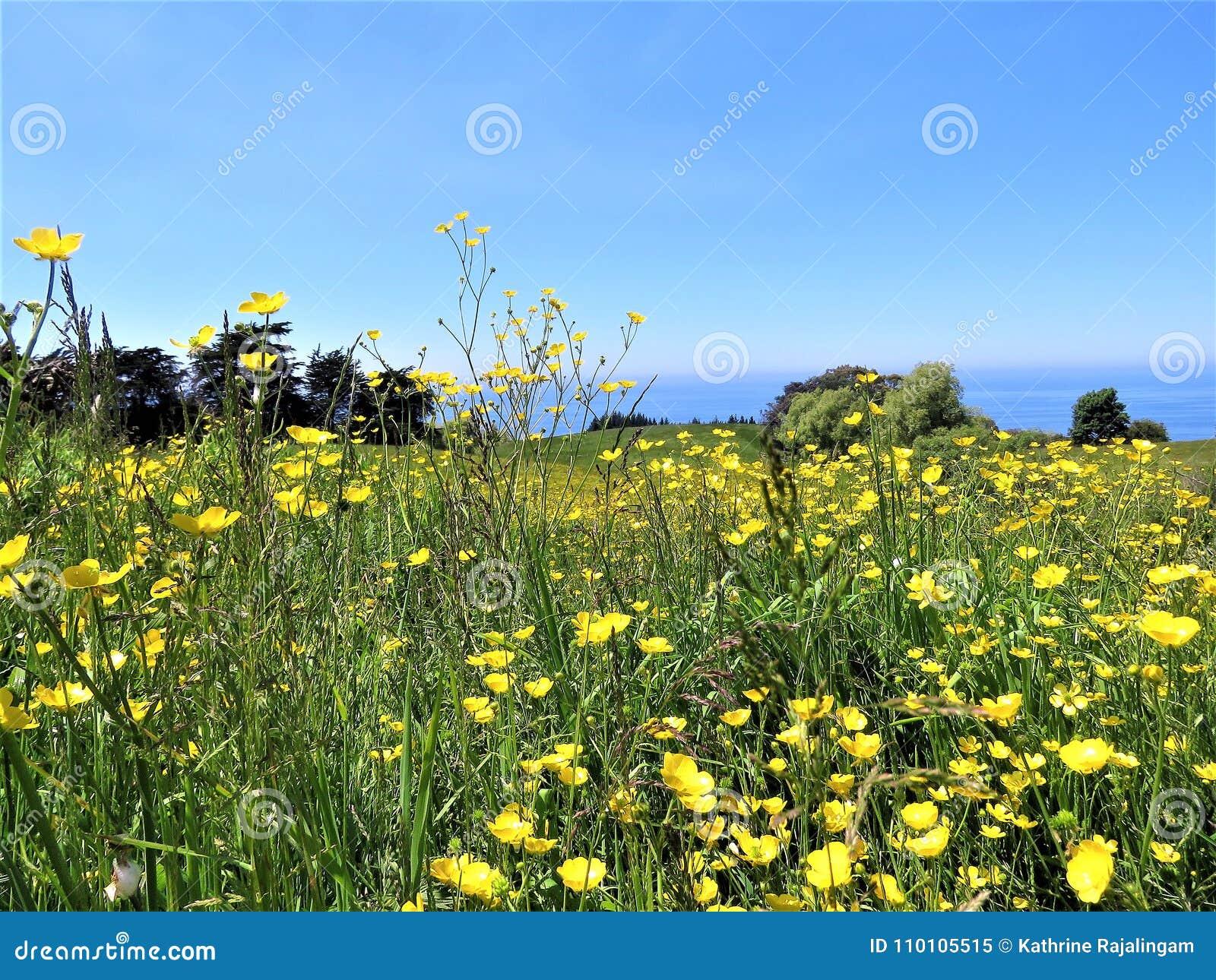 Landschappen met gele bloem in de voorgrond