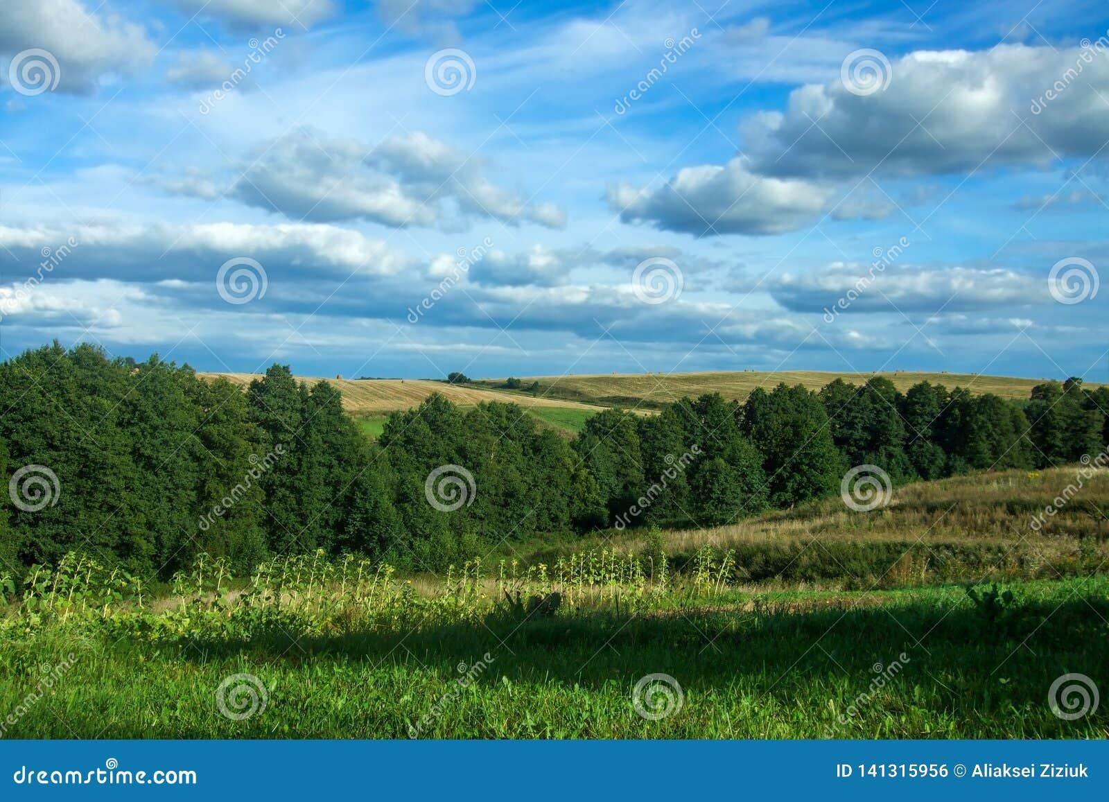Landschapshemel, bos, heuvels, zonnebloemen
