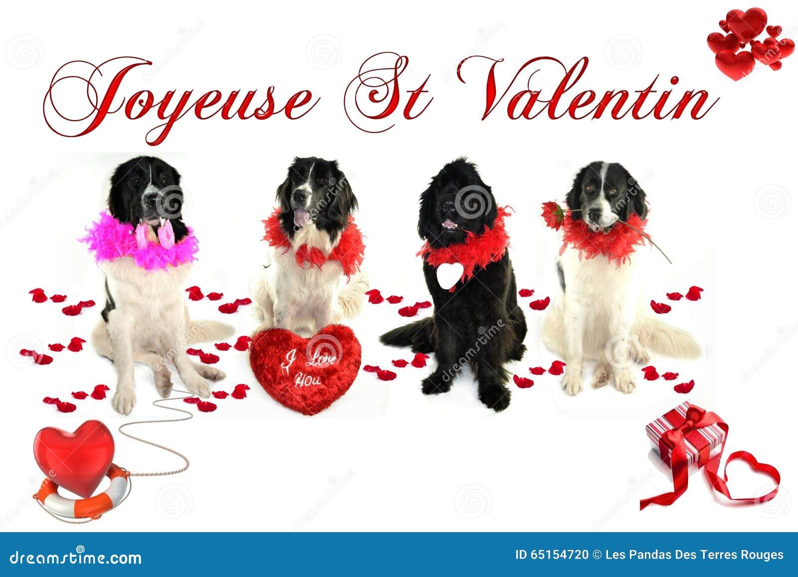 Landseer för romantiker för valentin för st för förälskelse för hund för Terre neuvenewfounland