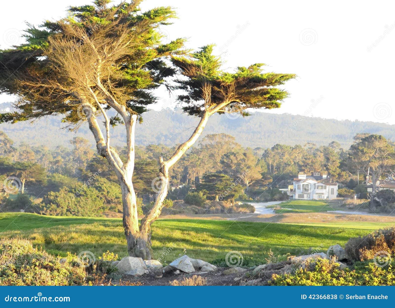 Landskap av Carmel i Kalifornien