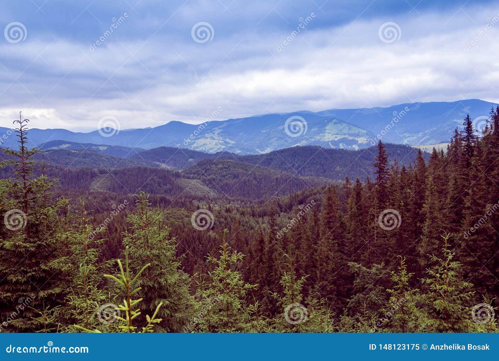Landskap av Carpathians berg med gran-tr?d och himmel