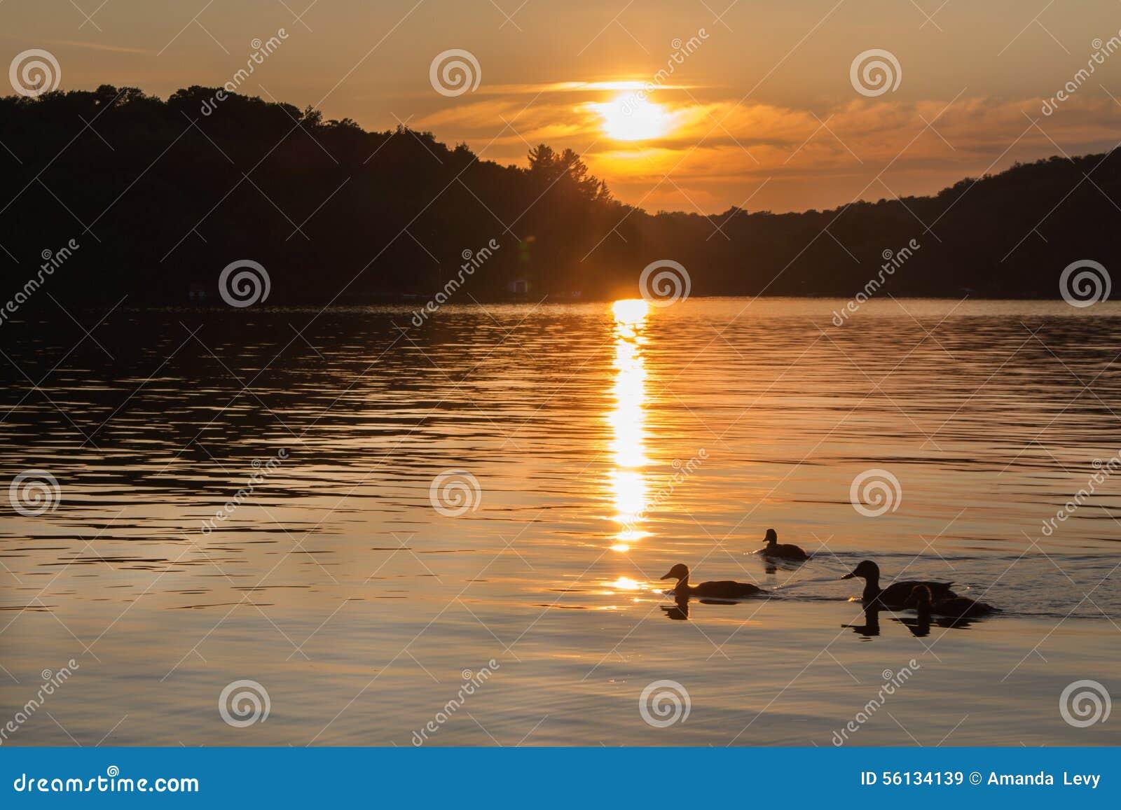 Landskap av en nordlig sjö på solnedgången med änder