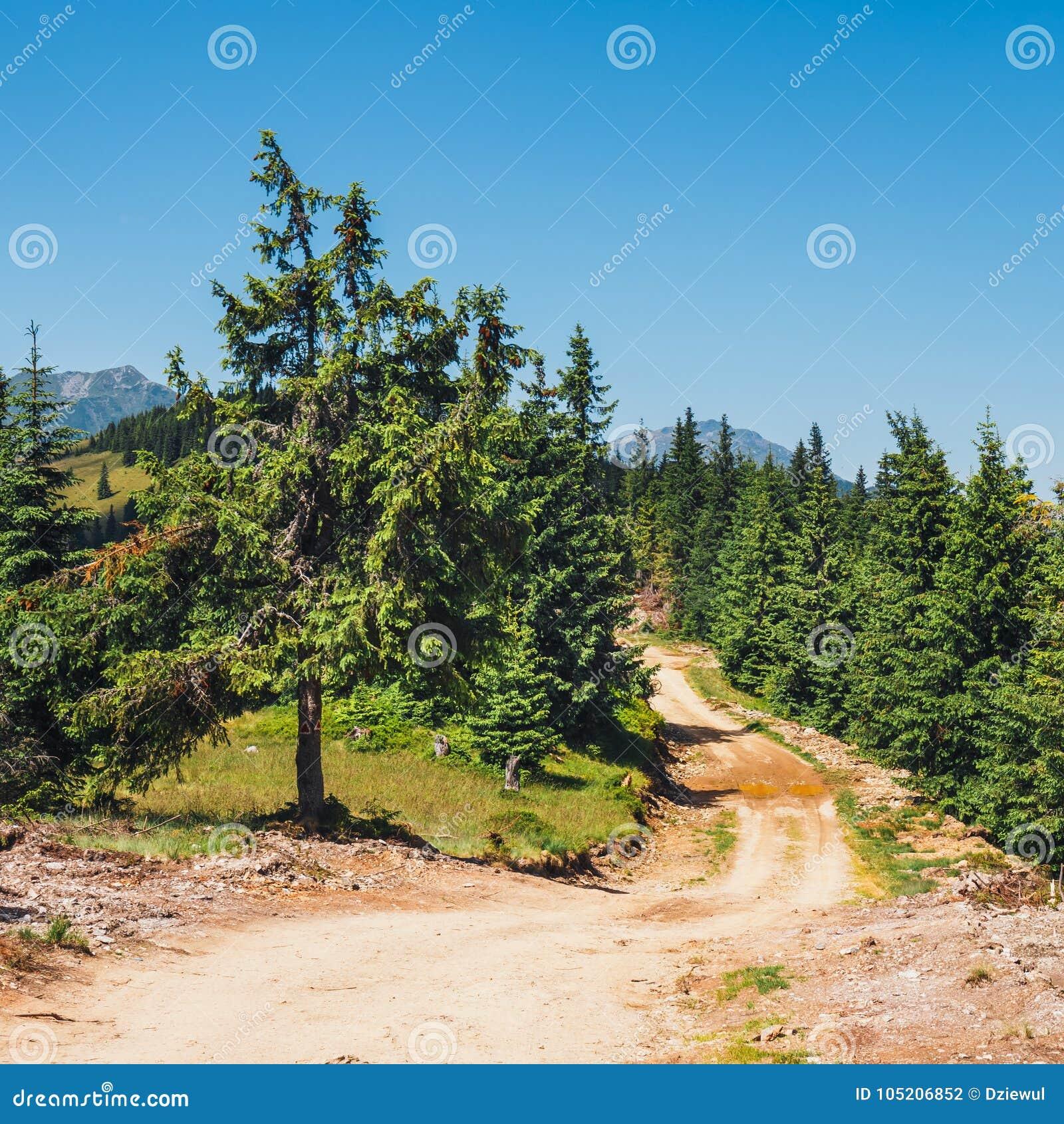 Landskap av Rodna berg i östliga carpathians, Rumänien