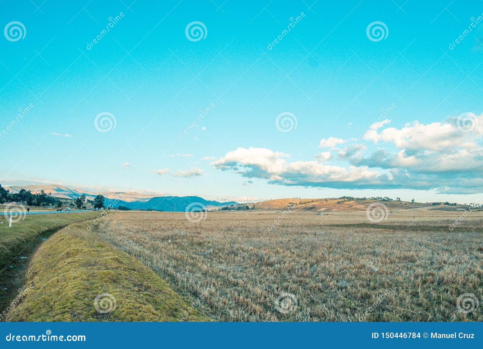 Landskap av veteskördar i