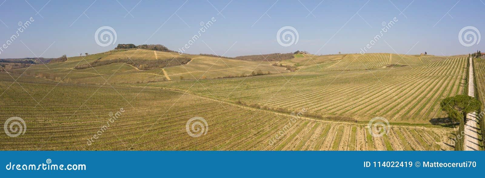 Landskap av vingårdarna av Tuscany i Italien under vårtid Vinrutten