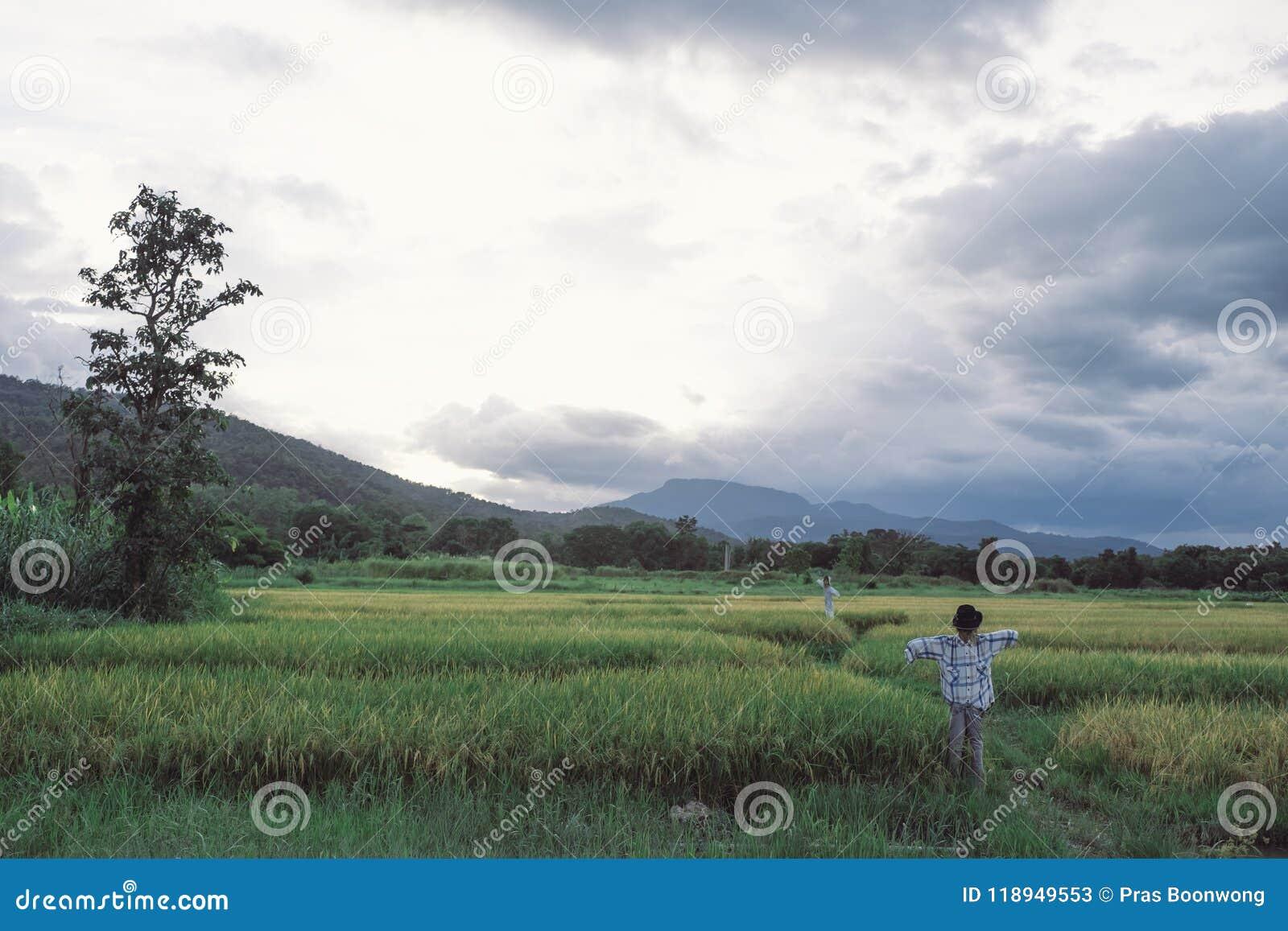 Landskap bilden av risfältet och berget med solnedgånghimmel b