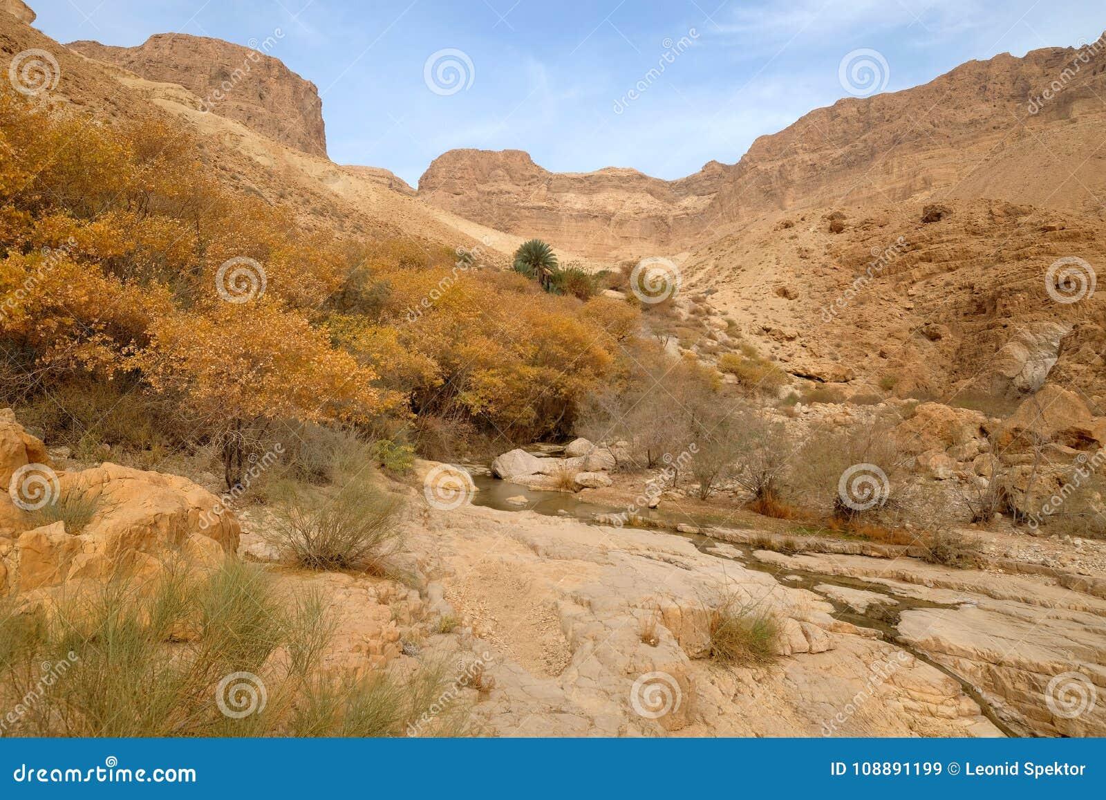 Landskap för Judea ökenberg