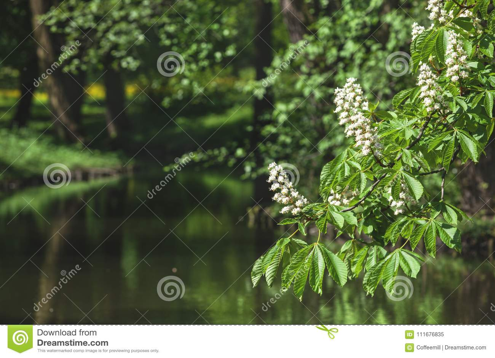 Landskap flod i en parkera med en kastanj