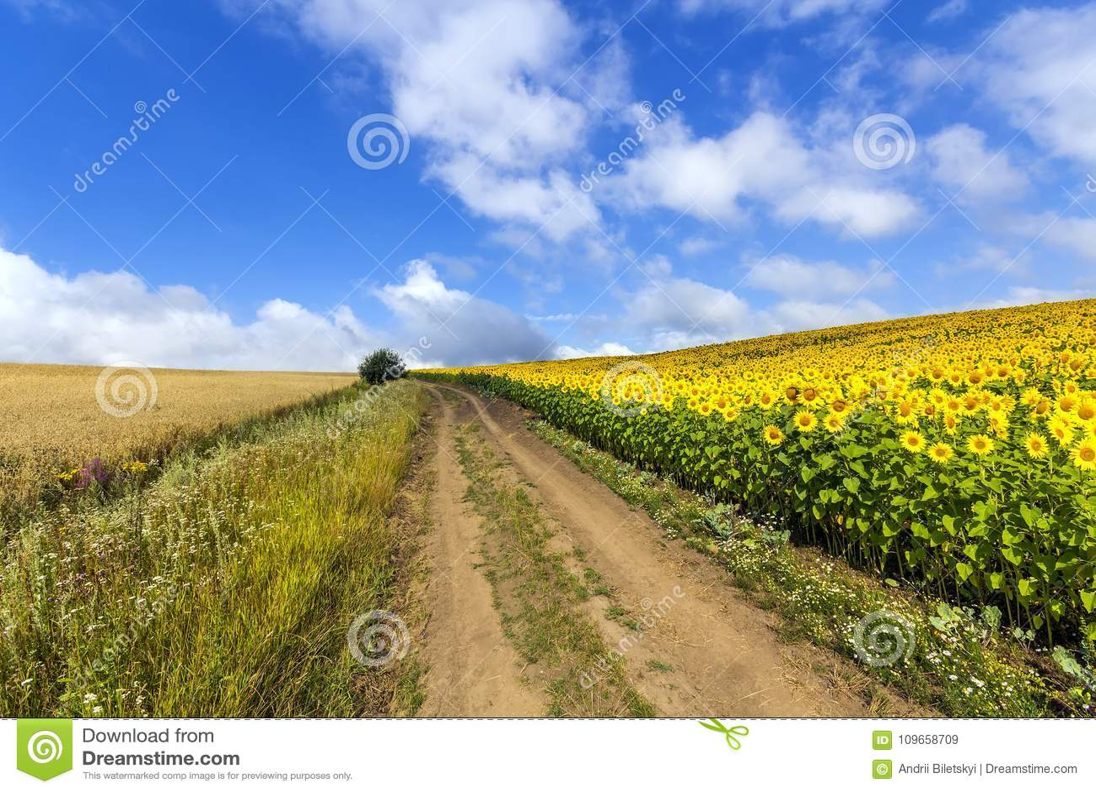 Landskap med grusvägen mellan ängen tidigt på våren