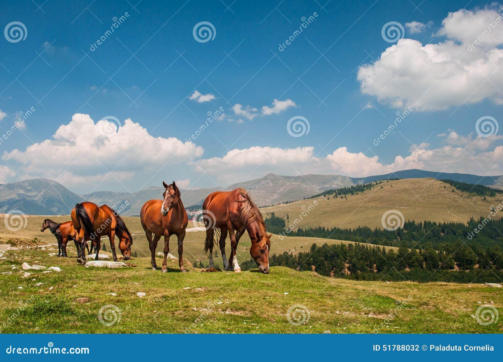 Landskap med hästar i Transalpine