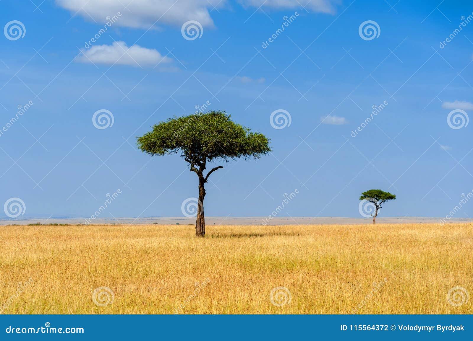 Landskap med inget träd i Afrika