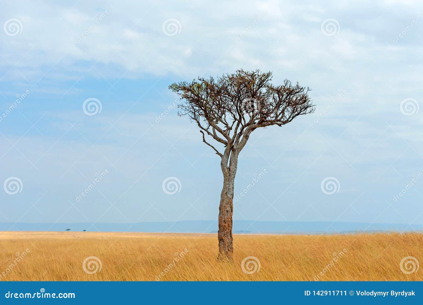 Landskap med inget tr?d i Afrika