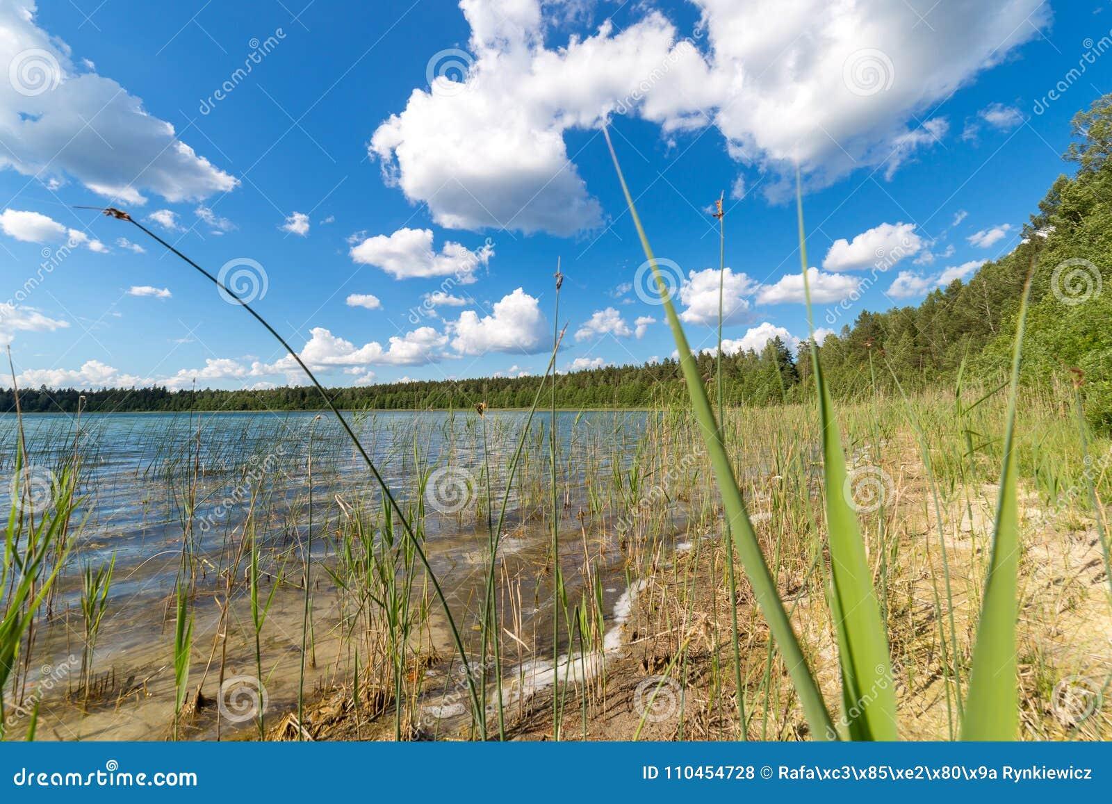Landskap med sjön i sommar blå sky