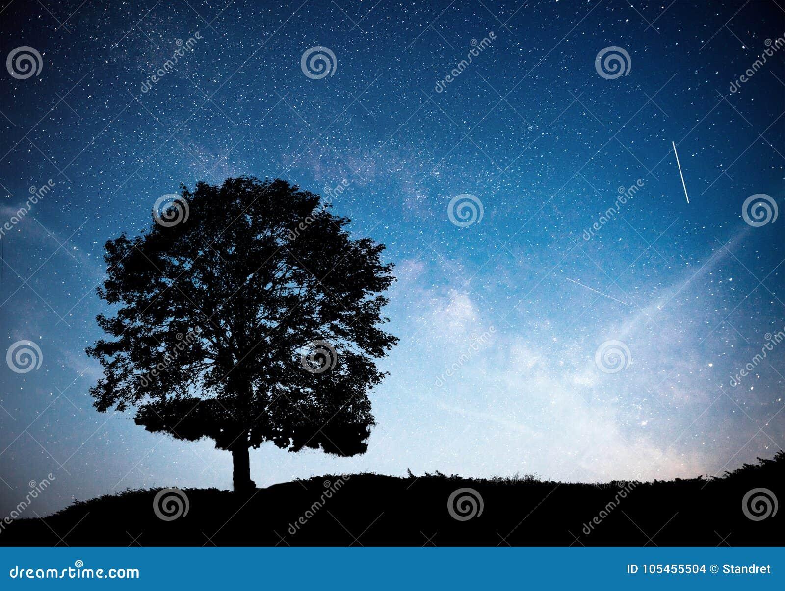 Landskap med stjärnklar himmel för natt och konturn av trädet på kullen Mjölkaktig väg med det ensamma trädet, fallande stjärnor