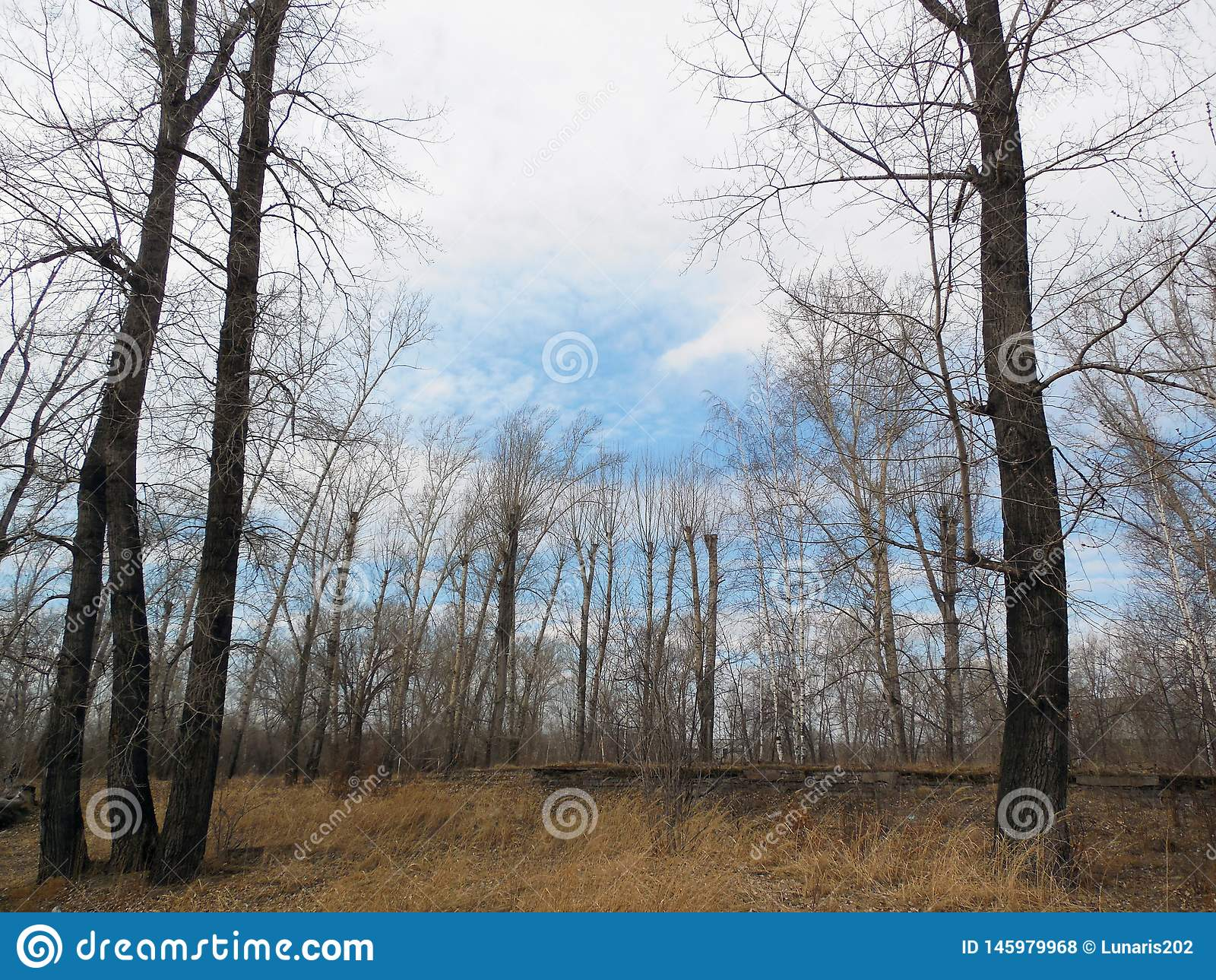 Landskap med träd på båda sidor och avlägsen skog