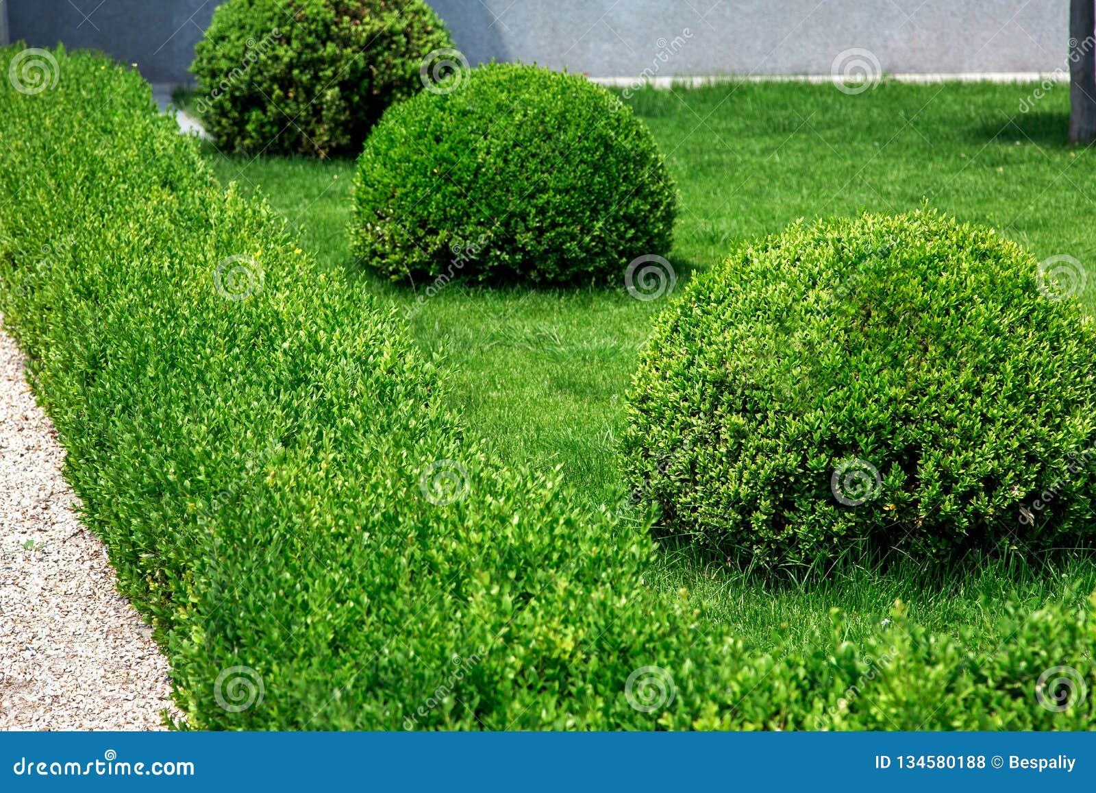 Landskapdesign av buskarna