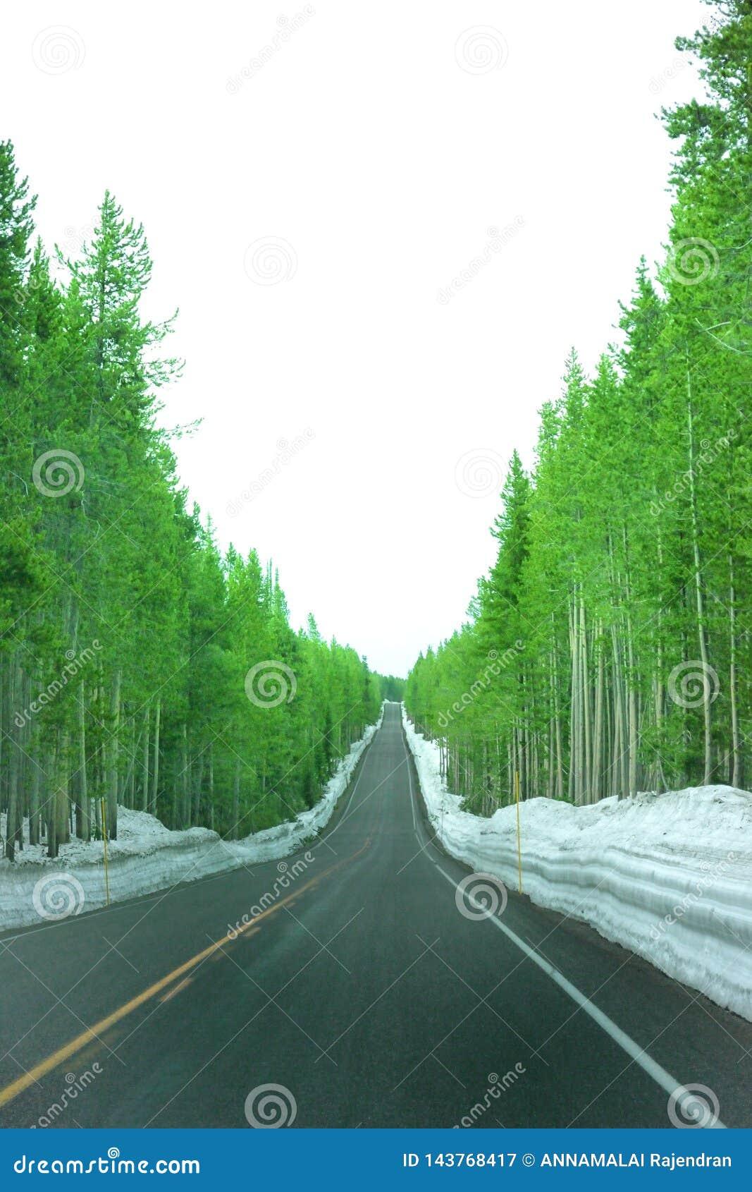 Landskapfoto av den övre kullevägen med gröna träd och den dolda sidan för snö