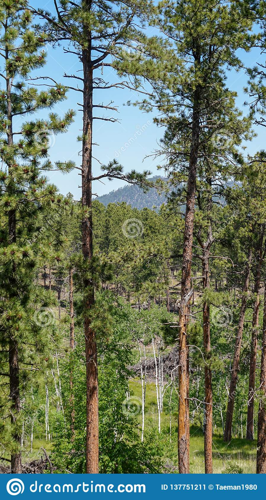 Landskapplats av ett drev till och med Blacket Hills