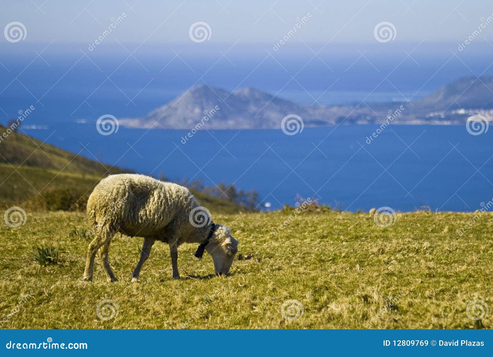 Landspe galego