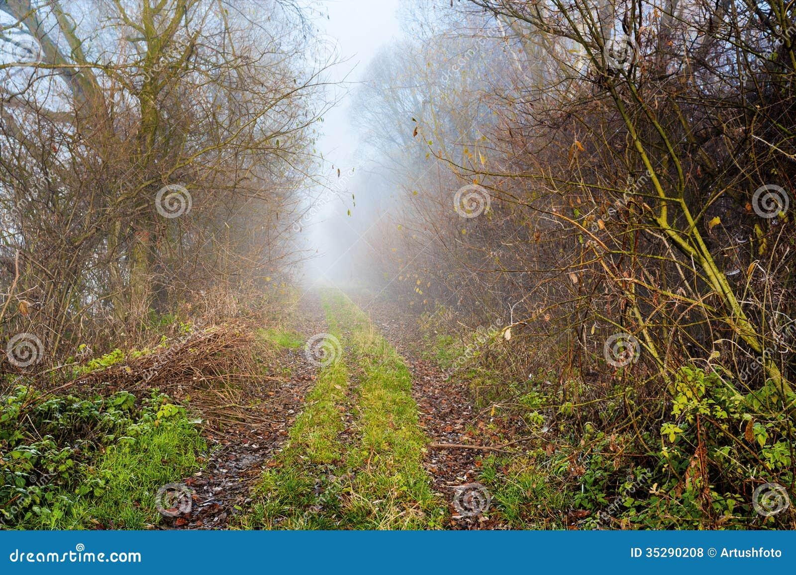 landstraße durch reichen laubwald stockfoto - bild von ruhig
