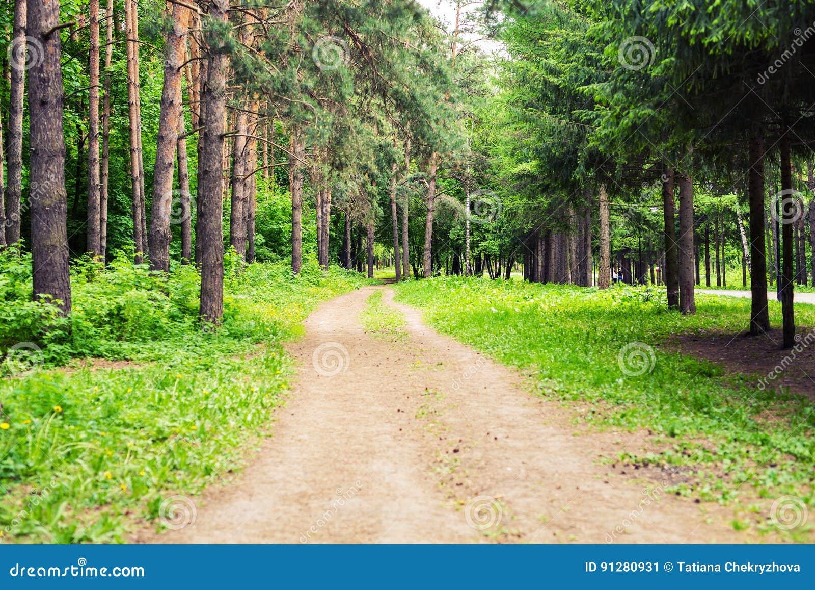 Landsvägen till och med den gröna frodiga trädgränden i härligt parkerar på solig sommardag