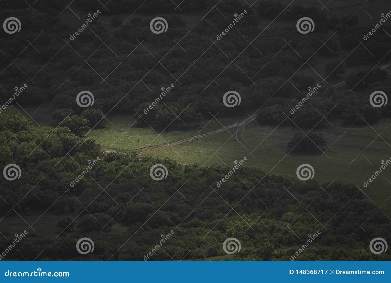 Landweg door de rand van het bos