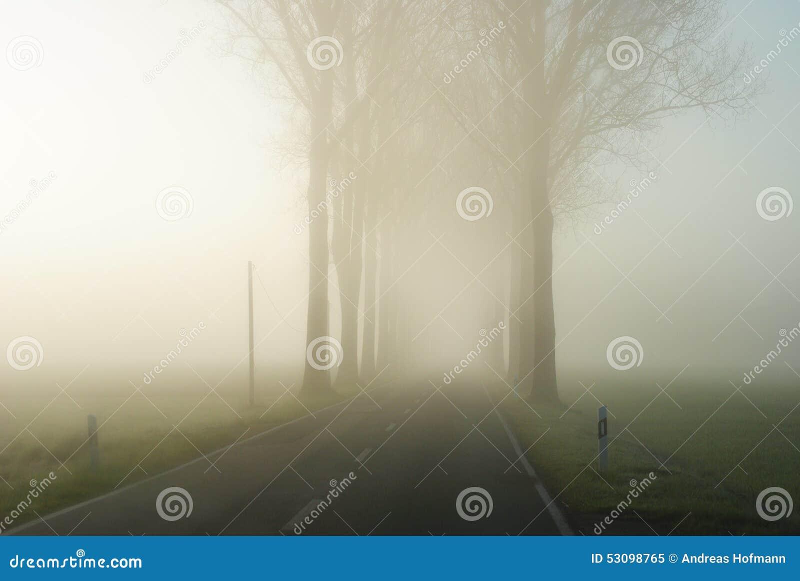 Landweg in een eindeloos landelijk landschap met een rij van naakte bomen