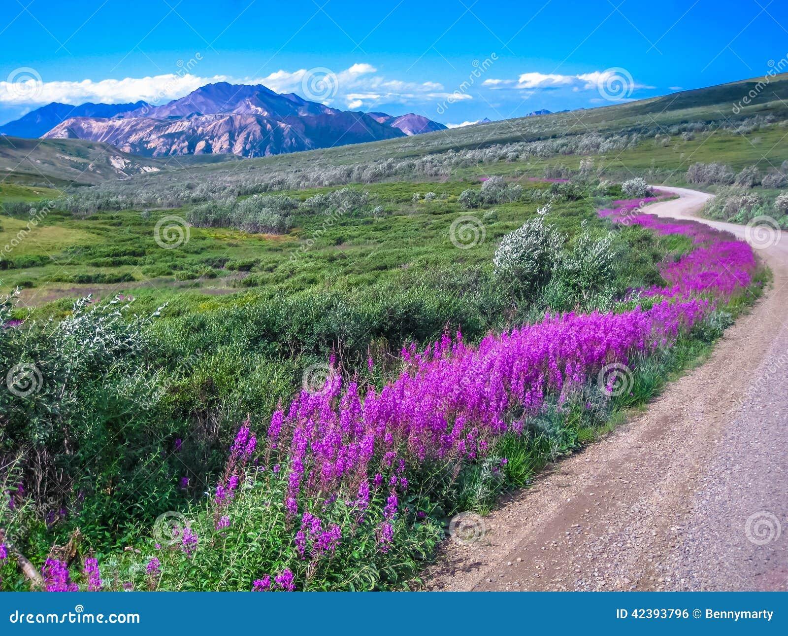 Landweg, het nationale park van Denali, Alaska
