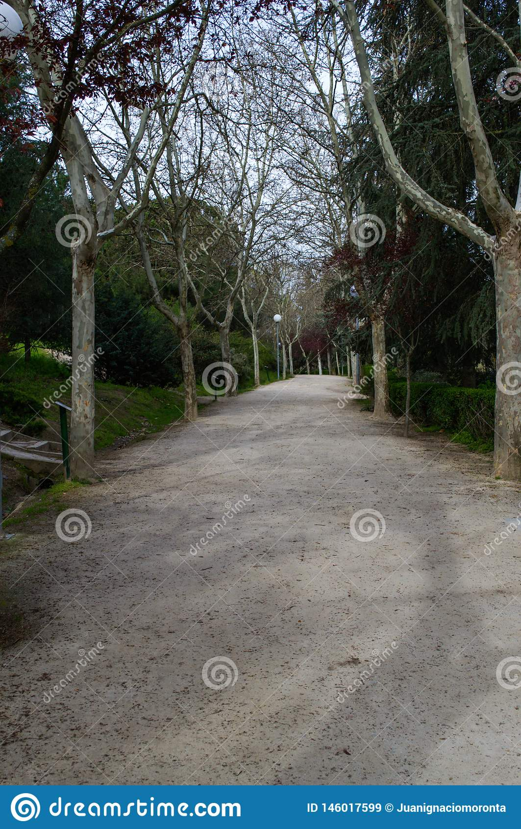 Landweg tussen bomen