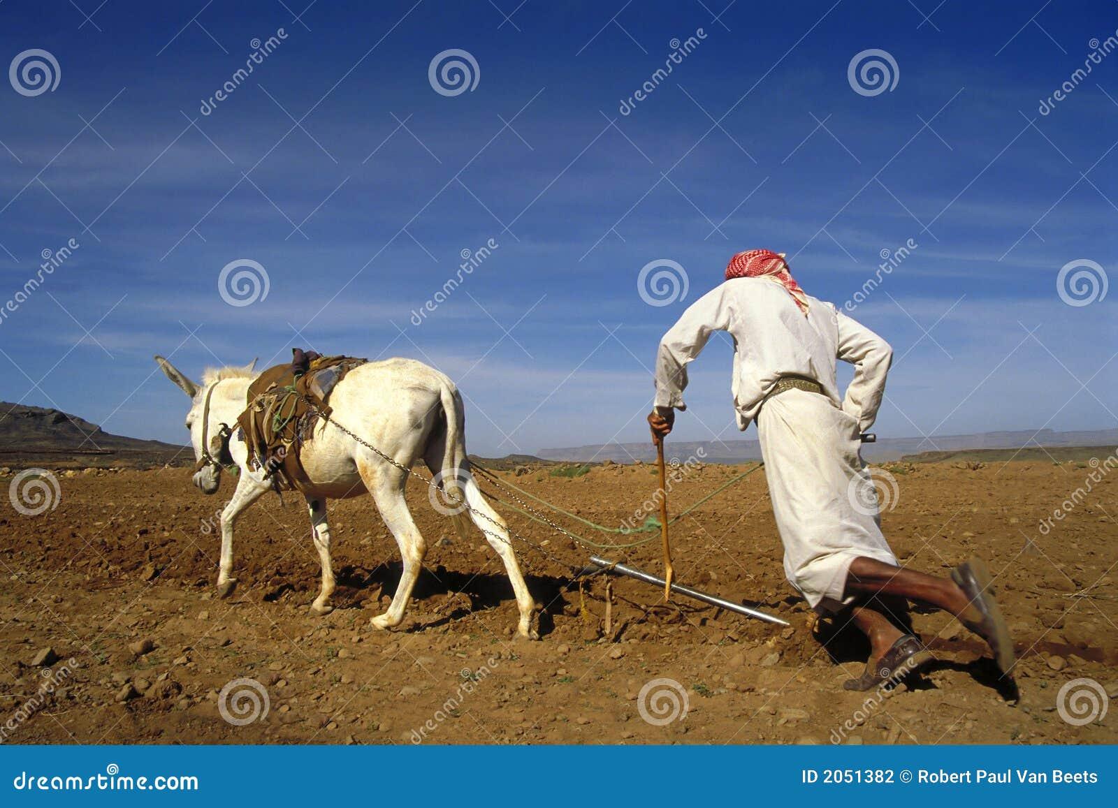 Junger landwirt bei der arbeit  Landwirt Bei Der Arbeit In Yemen Stockfoto - Bild: 2051382