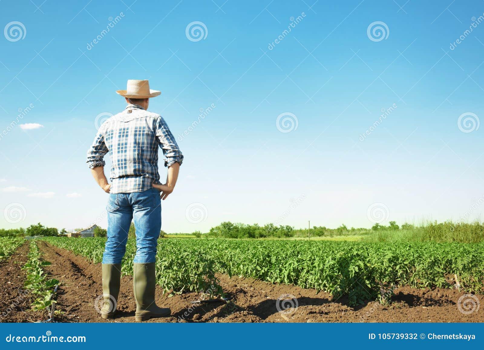 Landwirt, der auf dem Gebiet mit Grünpflanzen steht