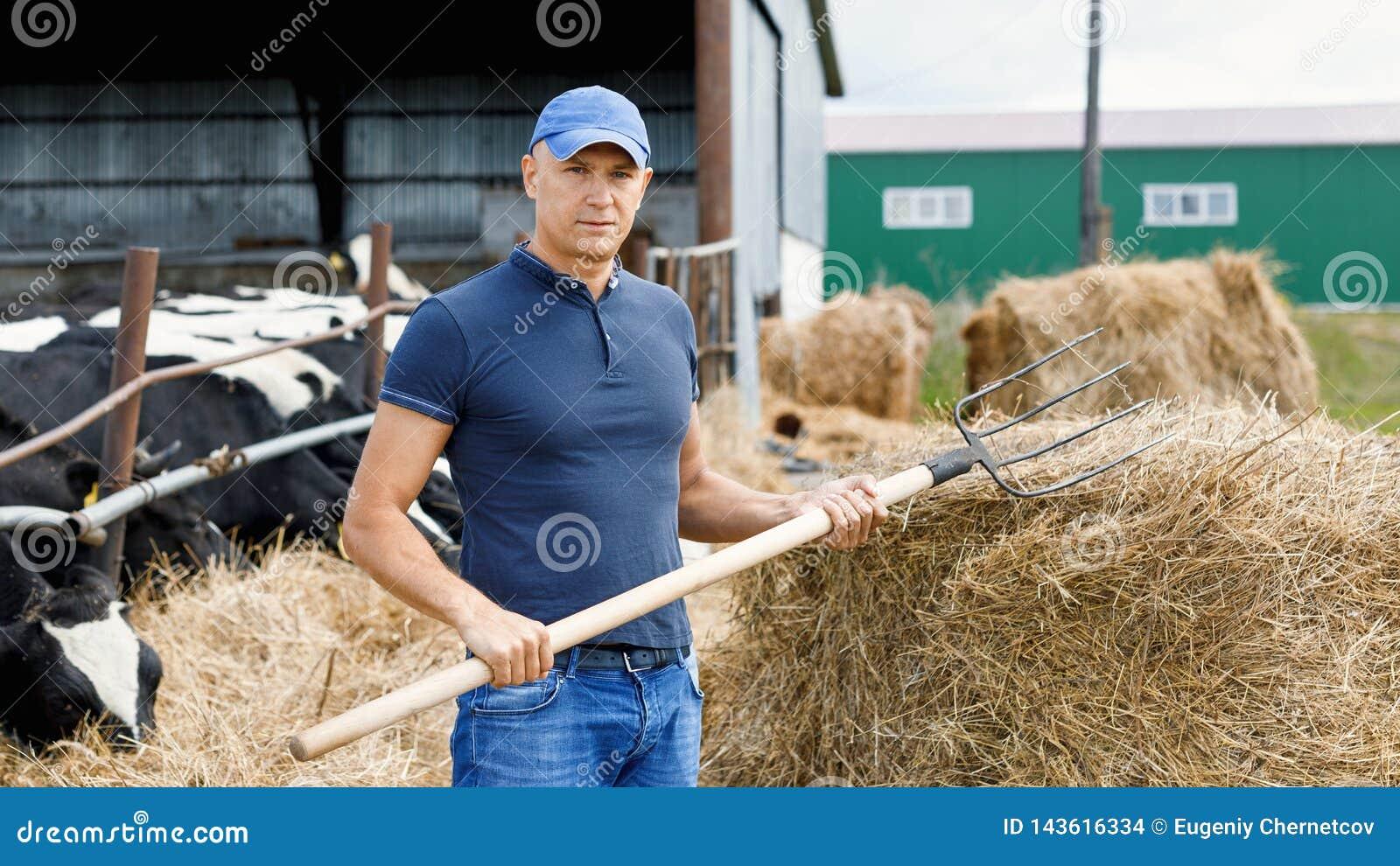 Landwirt, der an Bauernhof mit Milchkühen arbeitet