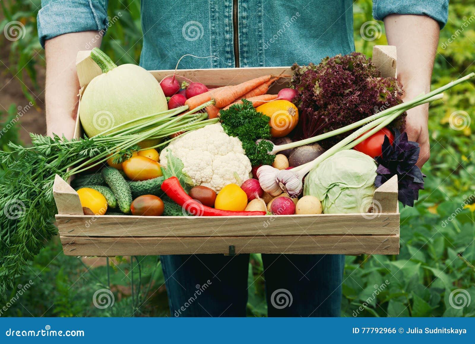 Landwirt, der einen Korb voll von organischen Gemüse und der Wurzel der Ernte im Garten hält Herbstferien-Danksagung