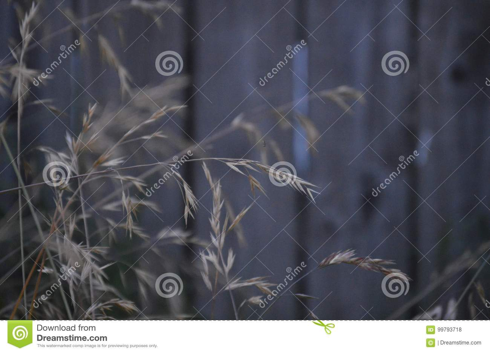 Landwirt Grass