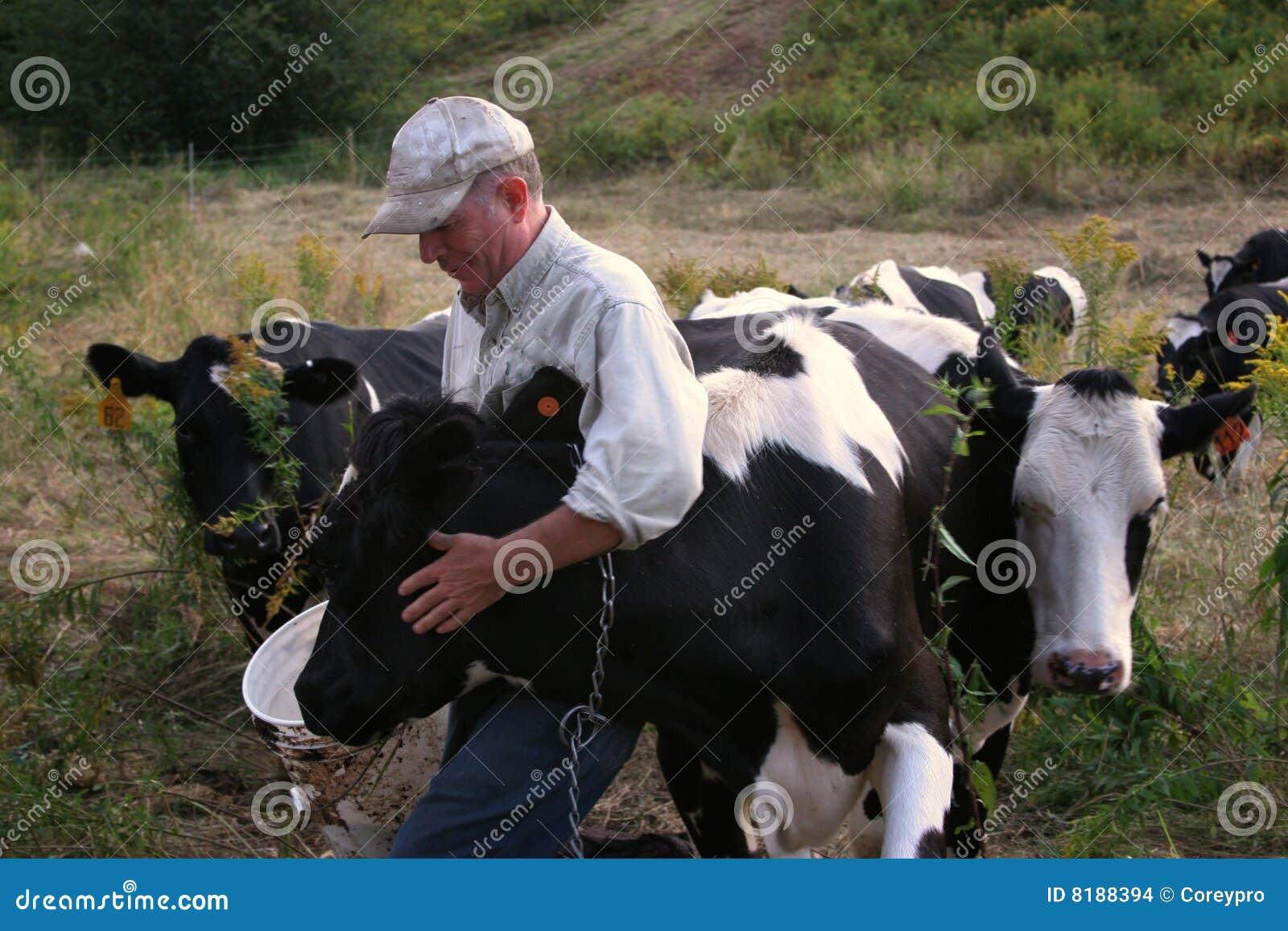 Landwirt mit Kühen