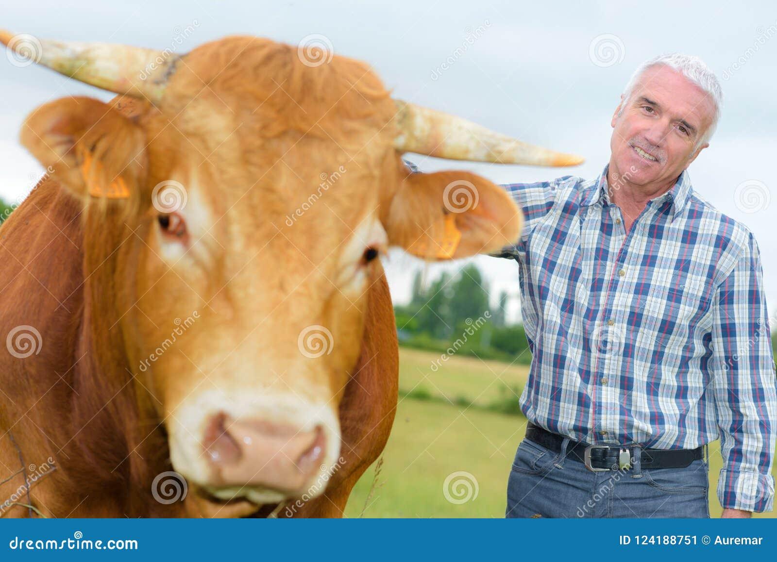 Landwirt nahe bei zahmem Ochsen
