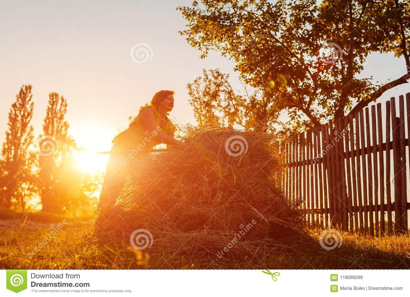 Landwirtfrau erfasst Heu mit Heugabel bei Sonnenuntergang in der Landschaft Harte Arbeit im Dorf