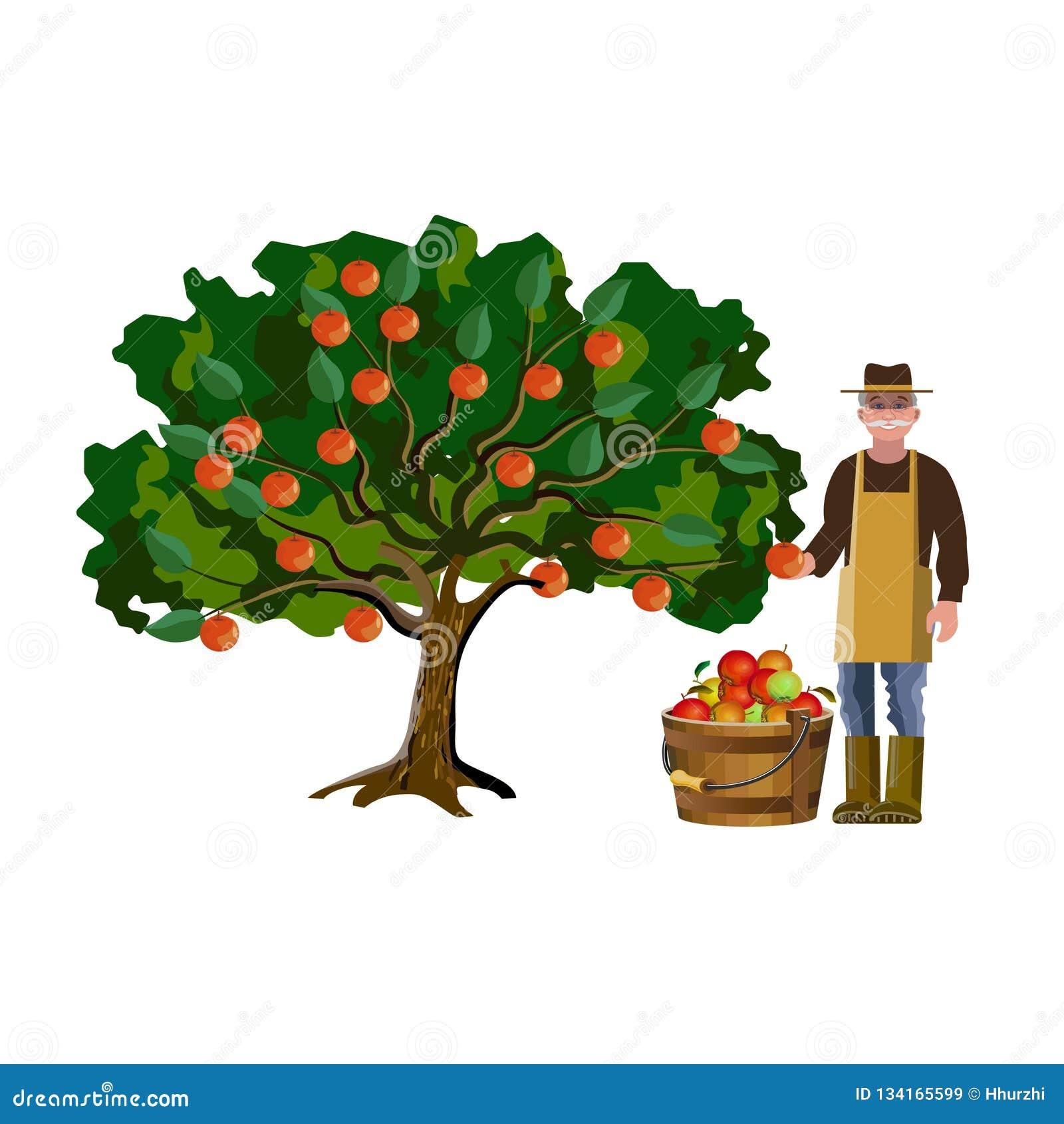 Landwirtsammeln weg von den Äpfeln