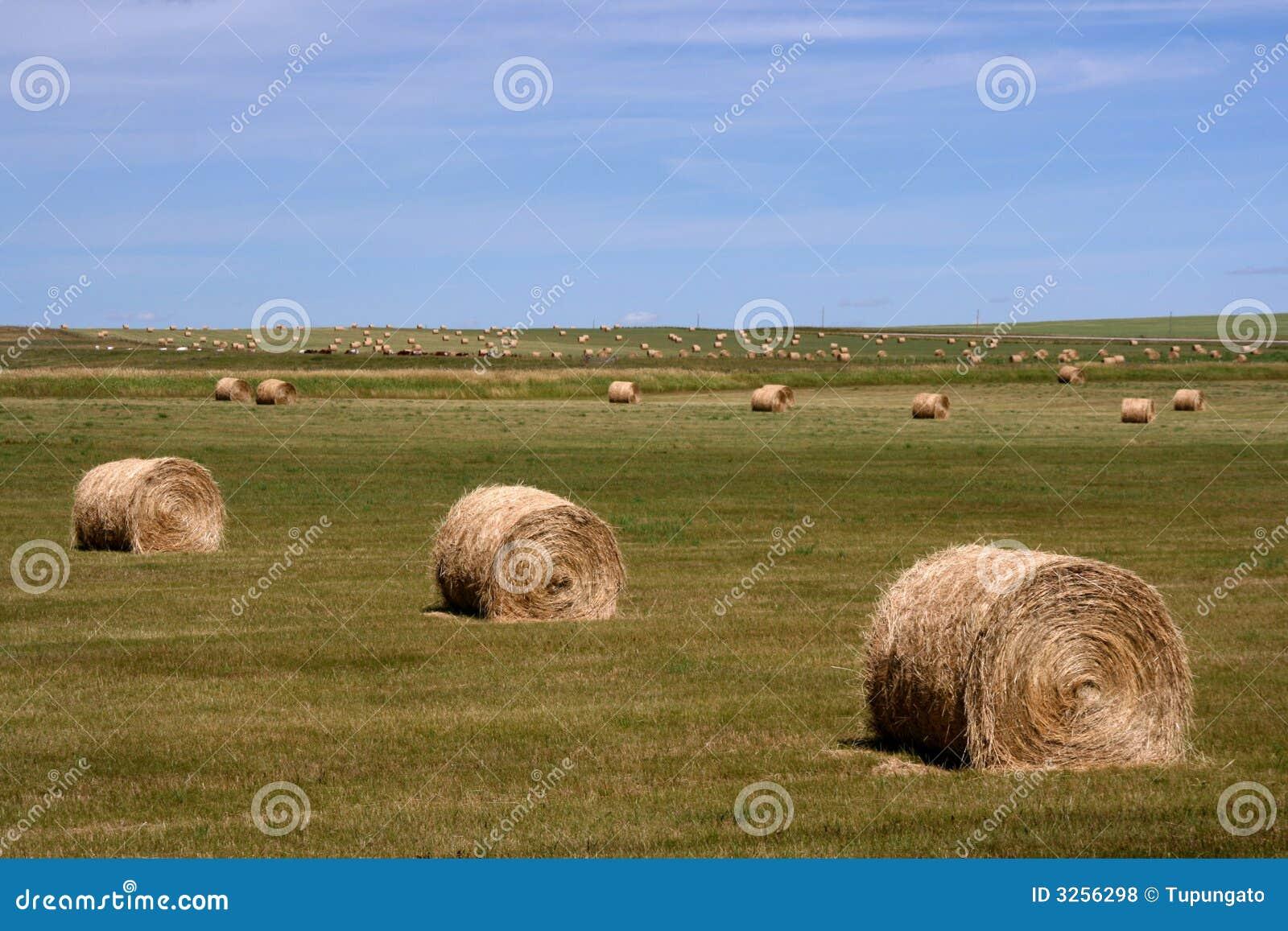 Heuballen. landwirtschaftliche landschaft der sommerzeit. alberta