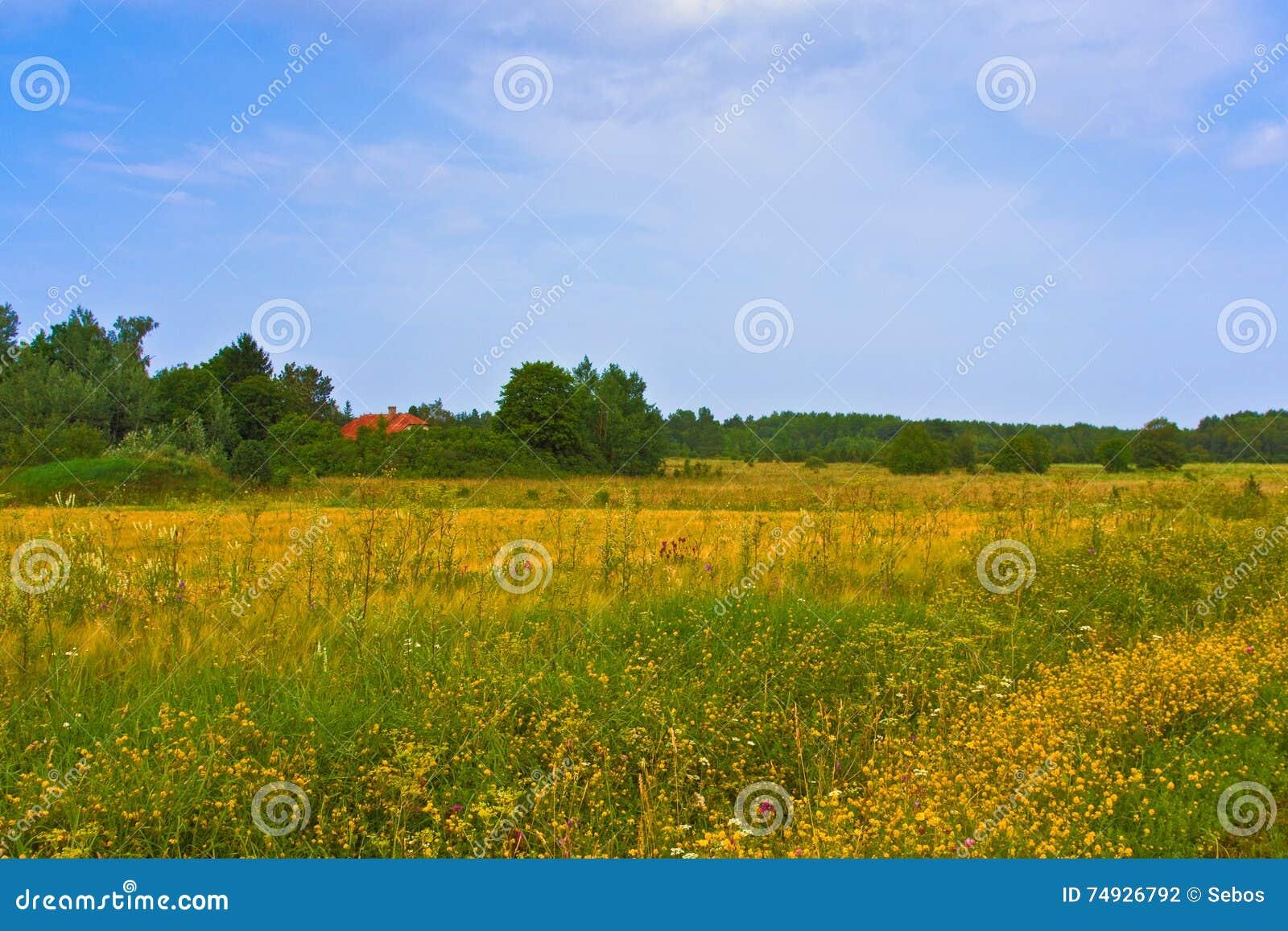 Landwirtschaftliche Sommerlandschaft Typische europäische Hirtenwiese, Weide, Feld Illustration der Landwirtschaft