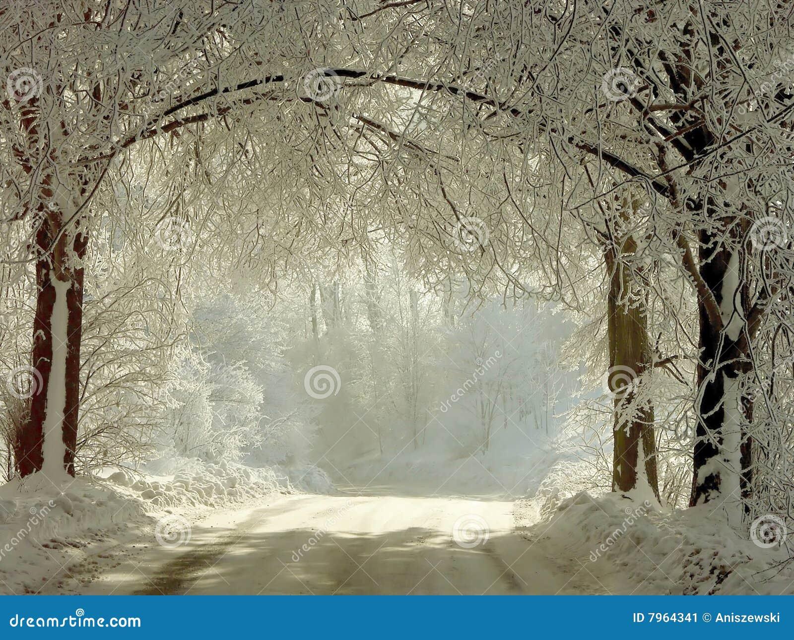 Landwirtschaftliche Straße des Winters durch die gefrorenen Bäume
