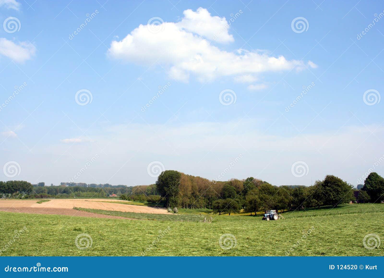 Landwirtschaftliche Szene