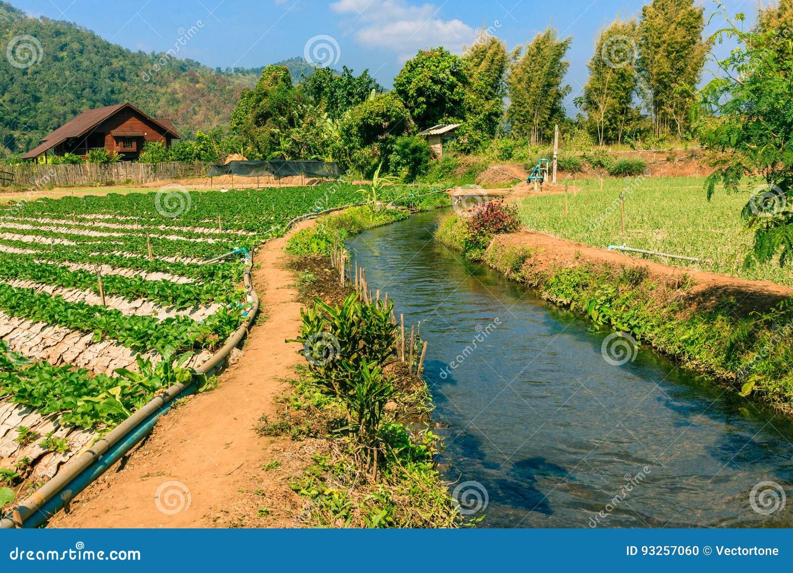 Landwirtschaftsfeld des Mischungsbiohof- und -bewässerungssystems