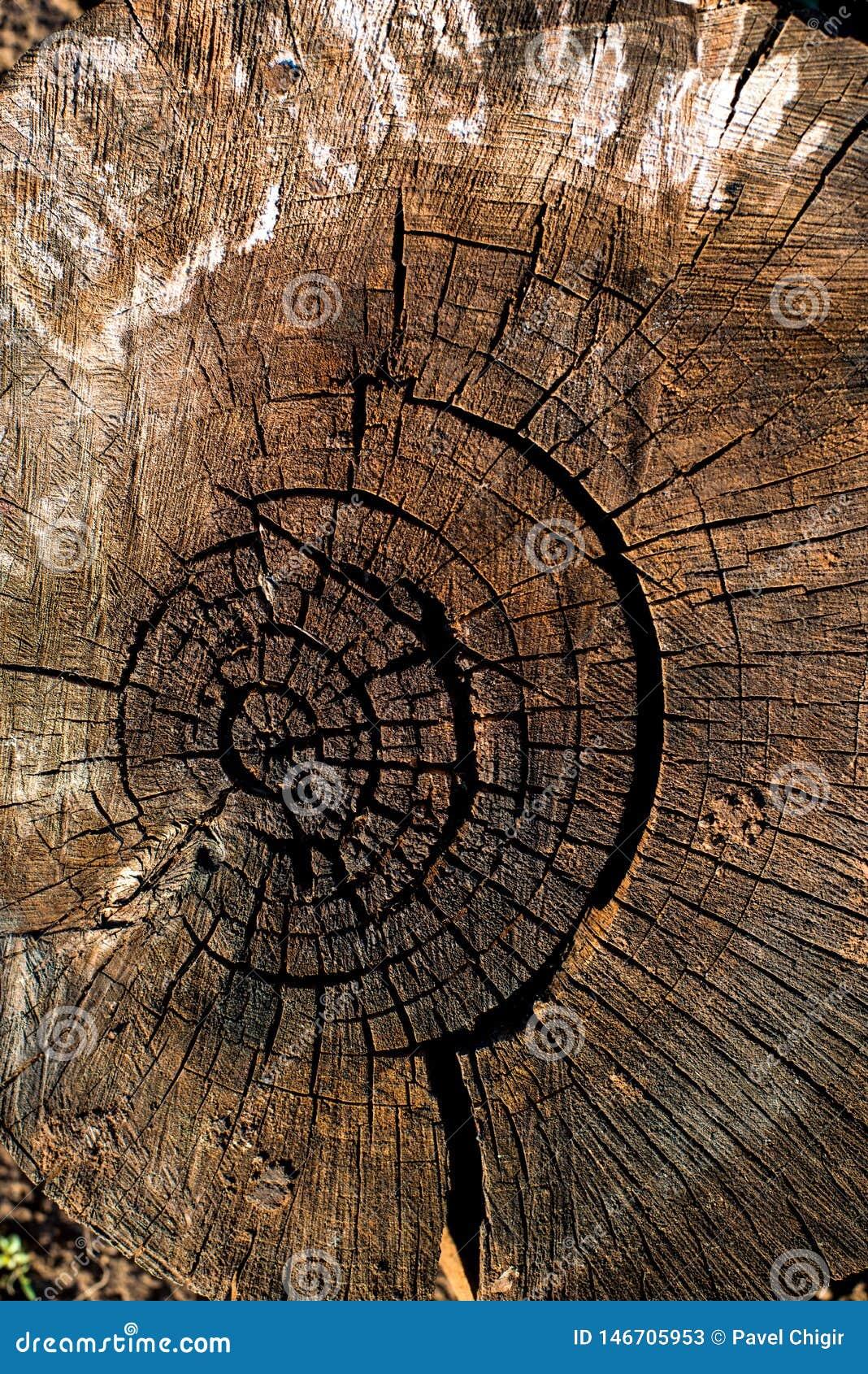 Lang gef?llt, der Stumpf ziemlich trocken Einzigartiges Muster von Natur aus geschaffen