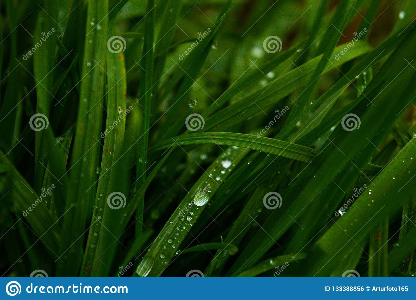 Lang grünes Gras, Regentropfen