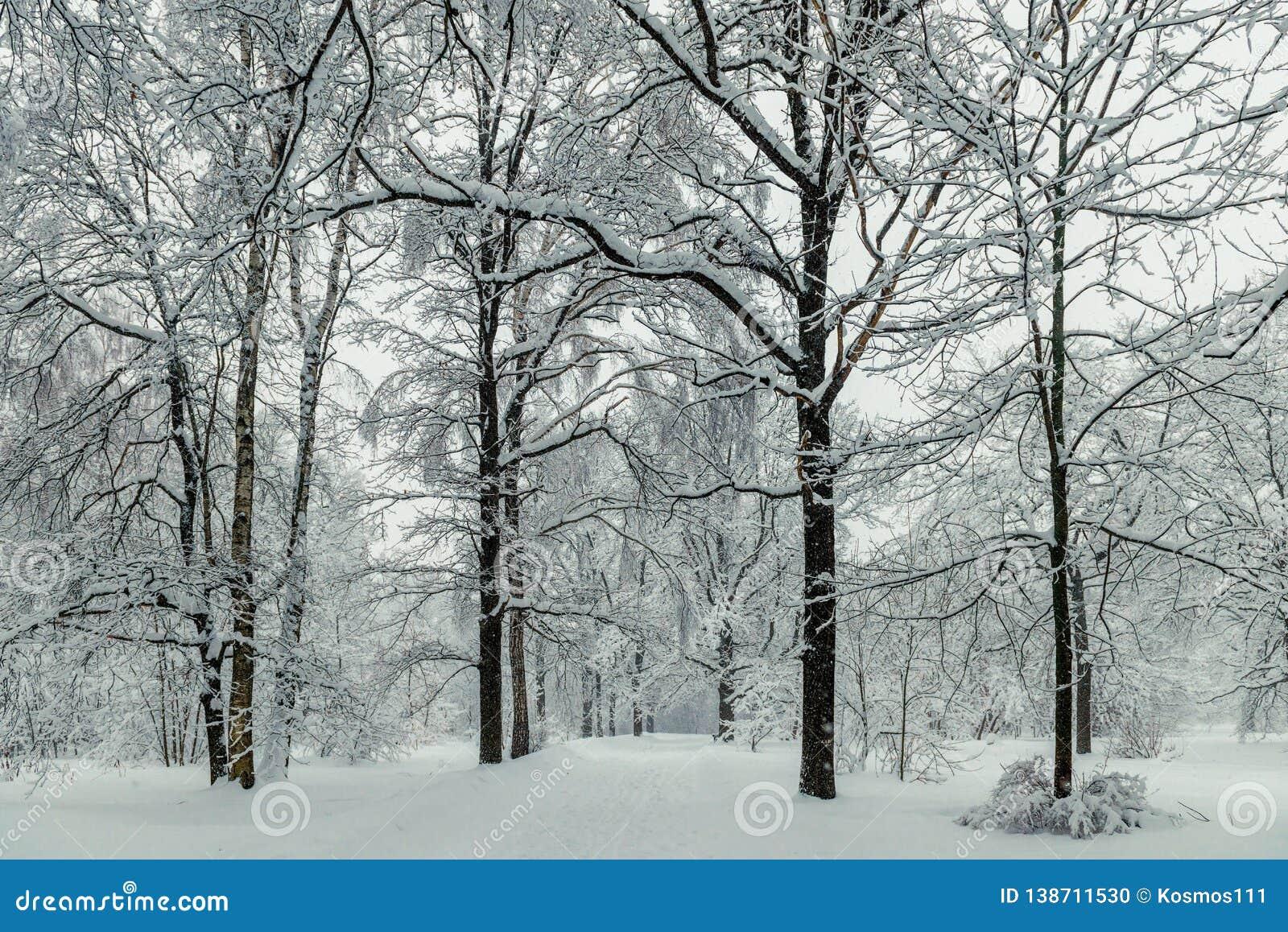 Lange bomen in het park tijdens de de winterdag