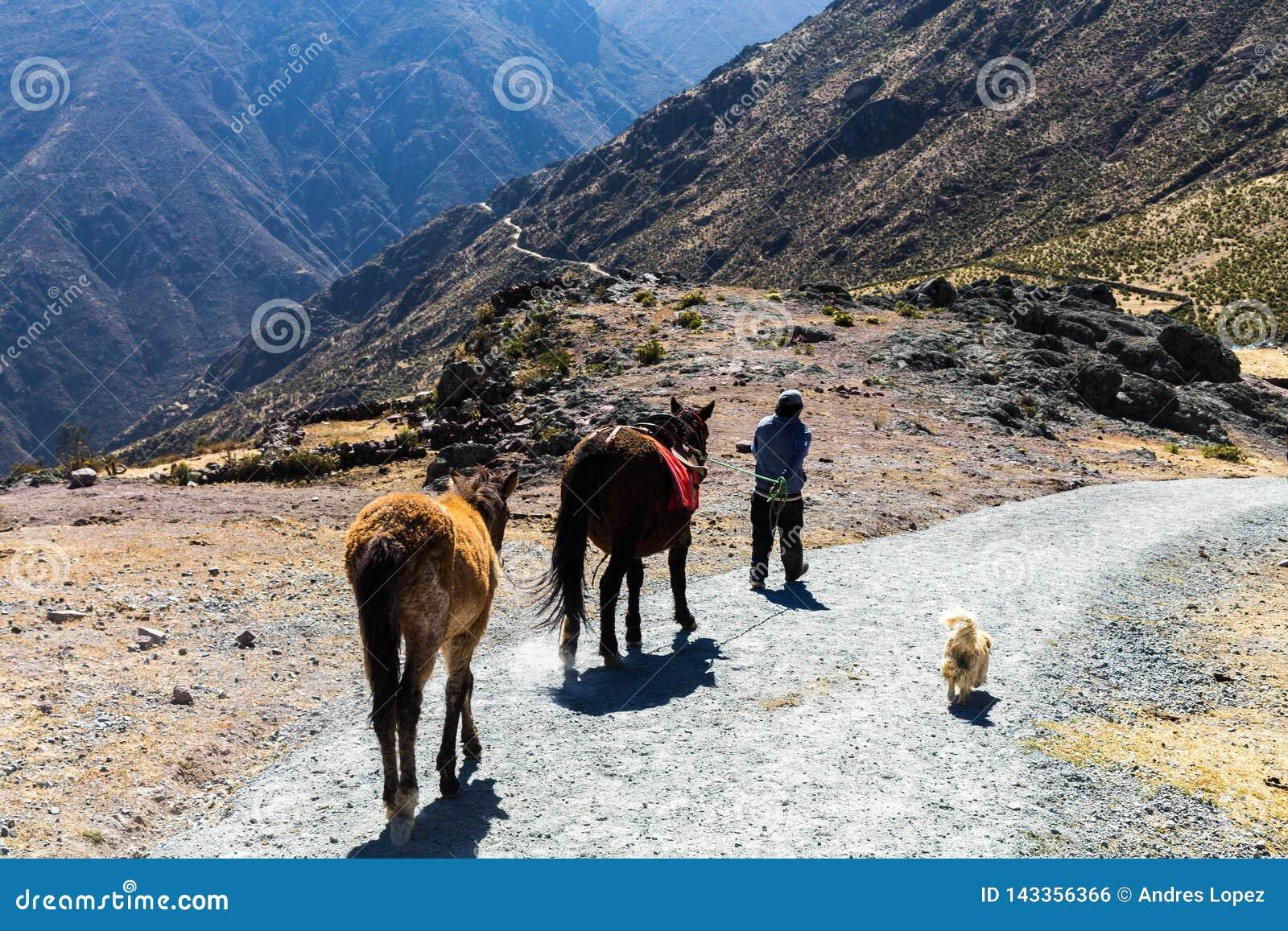 Lange weg in de bergen van Peru