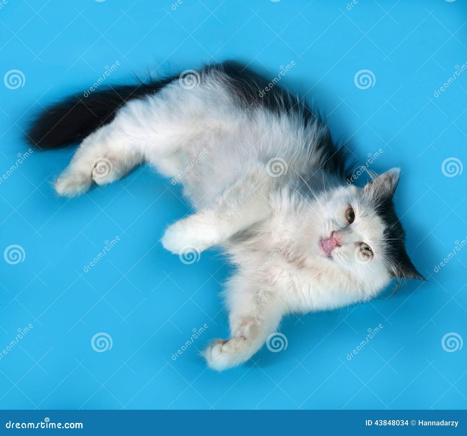 geleckt von katze